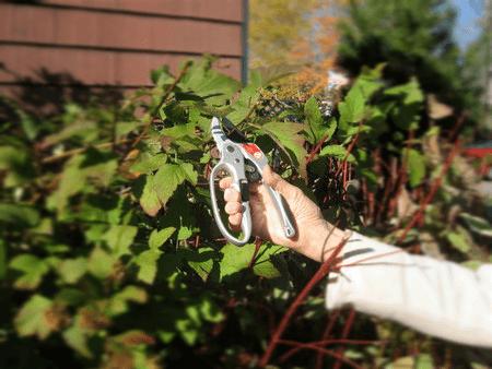 Pruners for spring gardening