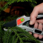 The Gardeners Friends Launching Pruners in Several New Markets